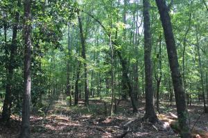 White Oak Investment Tract B - Clarendon County SC