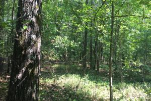 White Oak Investment Tract B in Clarendon, SC (2 of 8)
