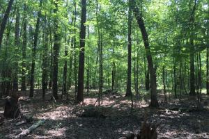 White Oak Investment Tract B in Clarendon, SC (5 of 8)