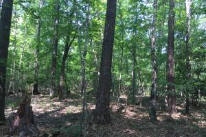 White Oak Investment Tract B in Clarendon, SC (7 of 8)