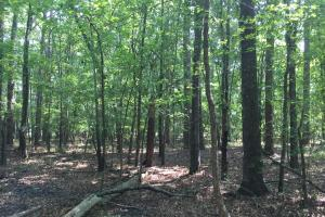 White Oak Investment Tract B in Clarendon, SC (6 of 8)