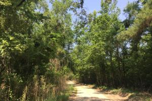 White Oak Investment Tract B in Clarendon, SC (8 of 8)