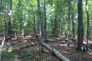 White Oak Investment Tract B in Clarendon, SC (3 of 8)