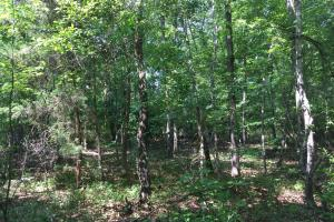 White Oak Investment Tract B in Clarendon, SC (4 of 8)