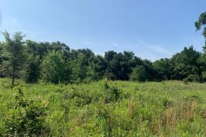 20 acres on VZ CR 2901  (11 of 14)