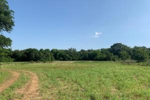 20 acres Timber, Meadows, Pond, Wildlife, Great Home Site - Van Zandt County TX