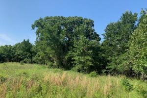 Wildlife haven with water source available on 20 acre tract in Eustace. (8 of 14)