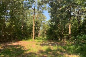 Property is 50% timber on 20 acres in Van Zandt County. (10 of 14)