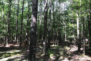 The tract has diversity, from solid pine stands, to mixed stands, to solid hardwoods, to a few small openings.  (4 of 13)