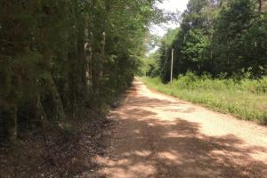 This is a view along CR 93 from the NE corner of the tract. (13 of 13)