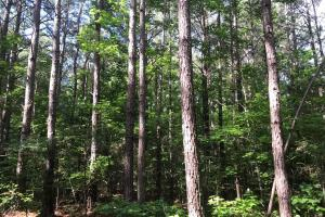 Timber, Investment, Hunting Opportunity - Chickasaw County MS