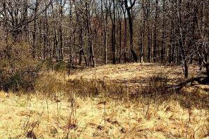 Idyllic County Hunt Area Location - Fauquier County VA