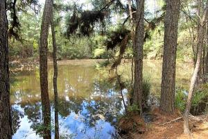 LARGE WOODED RANCHETTE HOMESITE - 35 - Montgomery County TX