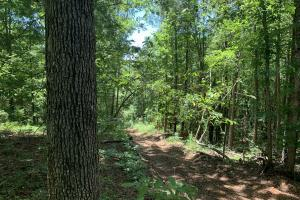 Pickens Mountain View Homesite in Pickens, SC (13 of 17)