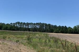 Creek Road Agricultural Land and Cattle Farm For Sale in Washington, FL (20 of 30)