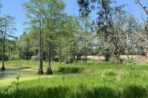 Creek Road Agricultural Land and Cattle Farm For Sale in Washington, FL (28 of 30)