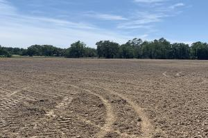 Creek Road Agricultural Land and Cattle Farm For Sale in Washington, FL (22 of 30)
