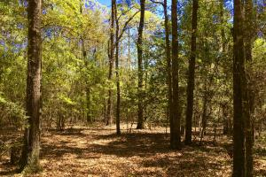 Okwakee Creek Camp and Pond Tract in Washington, AL (2 of 19)