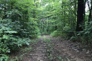 Corryton Tennessee Land and Homesite in Union, TN (14 of 20)