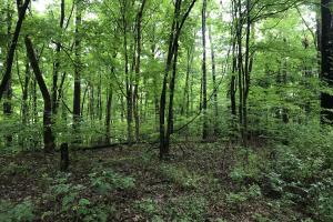 Corryton Tennessee Land and Homesite in Union, TN (3 of 20)