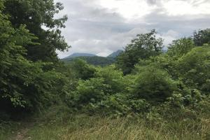 Corryton Tennessee Land and Homesite in Union, TN (8 of 20)