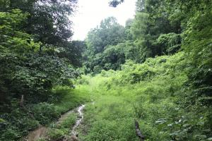 Corryton Tennessee Land and Homesite in Union, TN (20 of 20)