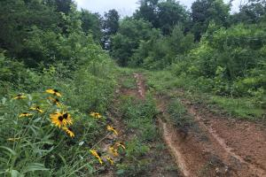 Corryton Tennessee Land and Homesite in Union, TN (11 of 20)