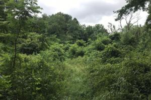 Corryton Tennessee Land and Homesite in Union, TN (16 of 20)