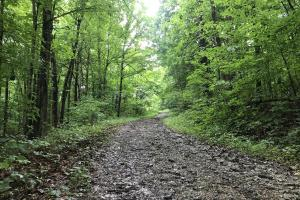 Corryton Tennessee Land and Homesite in Union, TN (2 of 20)