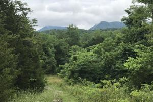 Corryton Tennessee Land and Homesite in Union, TN (5 of 20)