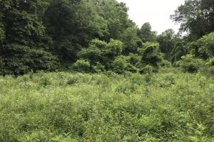 Corryton Tennessee Land and Homesite in Union, TN (15 of 20)