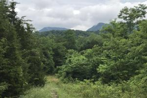 Corryton Tennessee Land and Homesite in Union, TN (6 of 20)