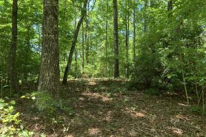 Table Rock Mountain View Homesite in Pickens, SC (12 of 17)
