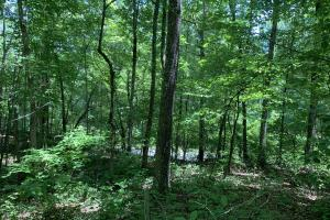 Table Rock Mountain View Homesite in Pickens, SC (4 of 17)