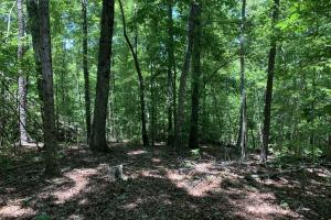 Table Rock Mountain View Homesite in Pickens, SC (13 of 17)