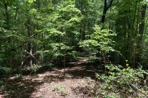 Table Rock Mountain View Homesite in Pickens, SC (15 of 17)