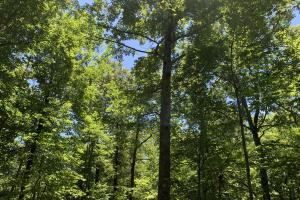 Table Rock Mountain View Homesite in Pickens, SC (9 of 17)