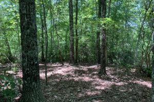 Table Rock Mountain View Homesite in Pickens, SC (14 of 17)
