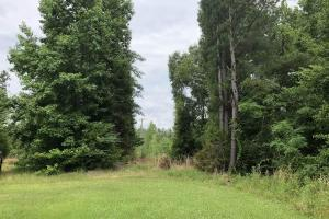 Sallis Small Timber or Investment Tract - Attala County MS