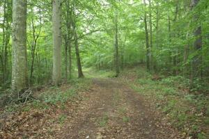 296 Acres - Timber, Foodplots, Hunting and Recreation  in Adair, KY (13 of 65)