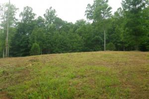 296 Acres - Timber, Foodplots, Hunting and Recreation  in Adair, KY (20 of 65)