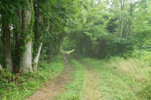 296 Acres - Timber, Foodplots, Hunting and Recreation  in Adair, KY (16 of 65)