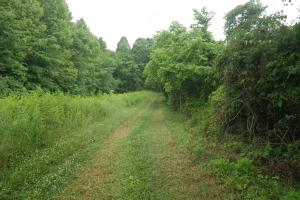 296 Acres - Timber, Foodplots, Hunting and Recreation  in Adair, KY (15 of 65)