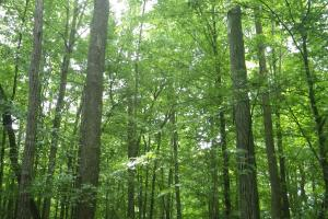 296 Acres - Timber, Foodplots, Hunting and Recreation  in Adair, KY (32 of 65)