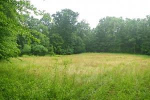 296 Acres - Timber, Foodplots, Hunting and Recreation  in Adair, KY (25 of 65)
