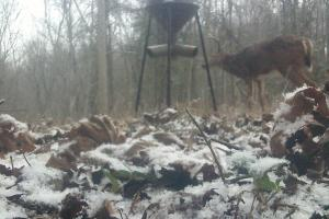 296 Acres - Timber, Foodplots, Hunting and Recreation  in Adair, KY (49 of 65)
