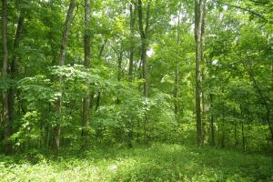 296 Acres - Timber, Foodplots, Hunting and Recreation  in Adair, KY (28 of 65)