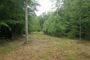296 Acres - Timber, Foodplots, Hunting and Recreation  in Adair, KY (21 of 65)