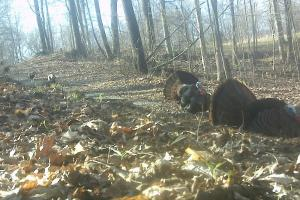 296 Acres - Timber, Foodplots, Hunting and Recreation  in Adair, KY (58 of 65)