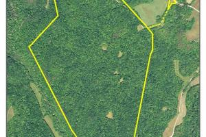 296 Acres - Timber, Foodplots, Hunting and Recreation  in Adair, KY (65 of 65)